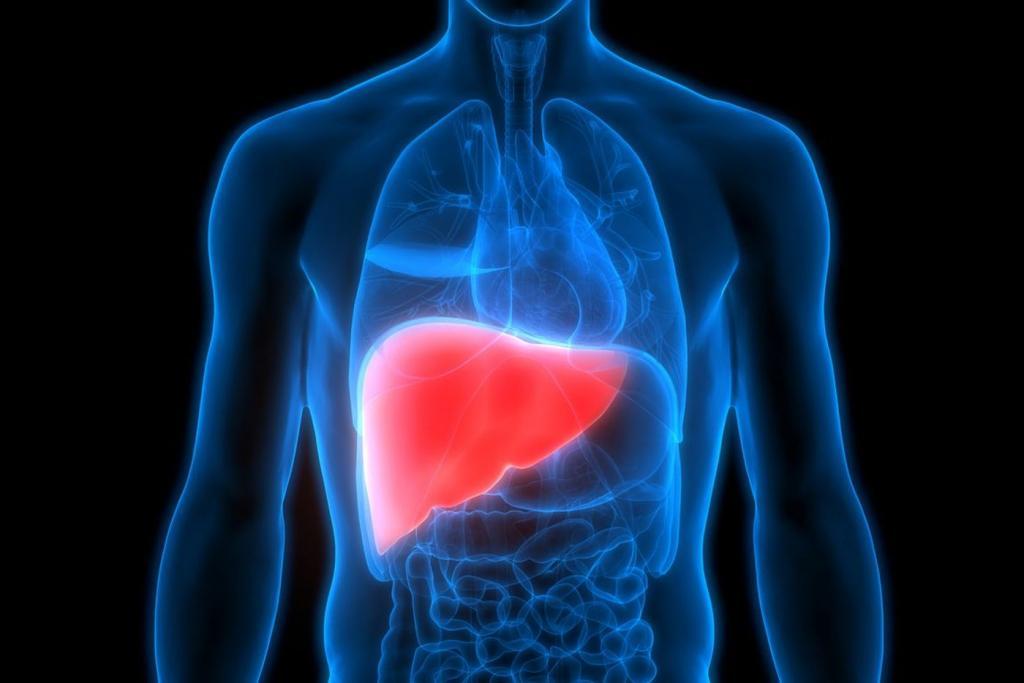 Увеличение печени при гепатозе